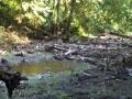 re_stocking_creek_008